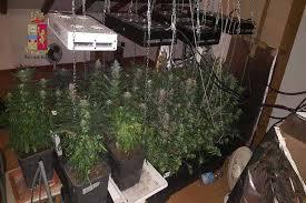 coltivazione-serra
